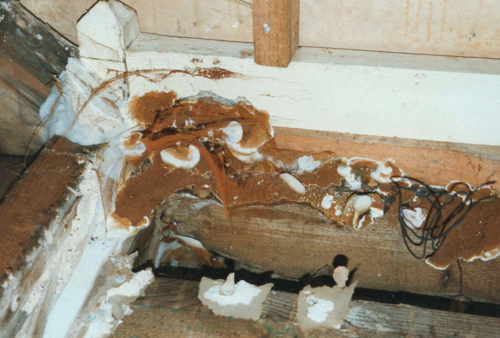 how to detect dry rot